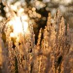 Prairie au printemps