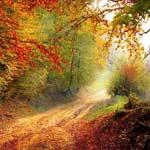 Route de forêt en automne